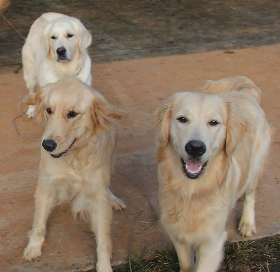 Shiloh in the back, Gracie on the left and Angel on the right