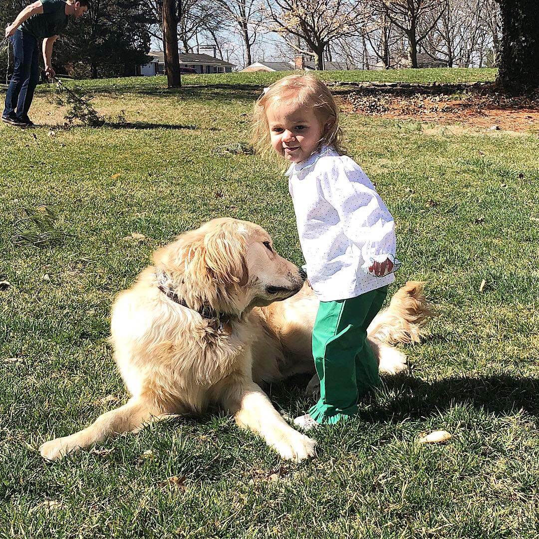 Happy puppy owners — Welcome to Young Ridge Goldens Kennels