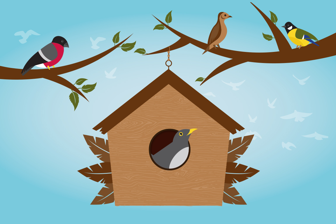 Bird_Week_Illustrations.jpg