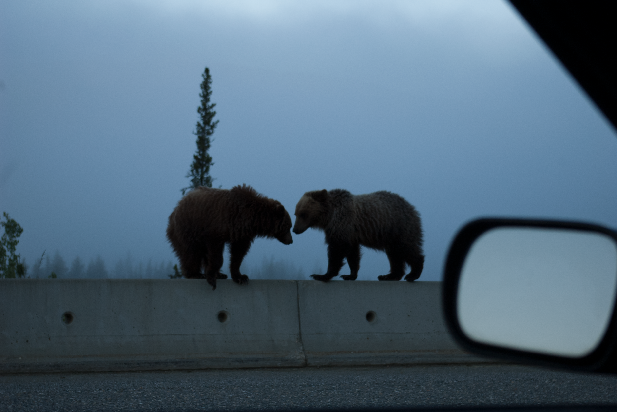 And some bears . . .