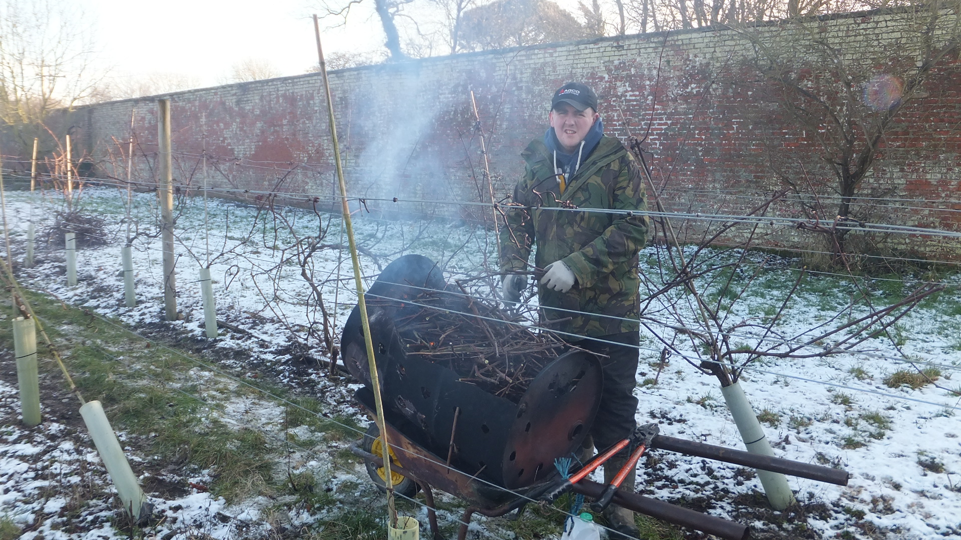 Tom pruning the vines, looking a little chilly.