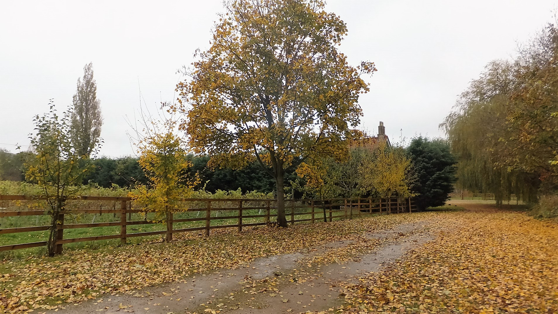 The approach to the Cottage is looking wonderful this autumn.
