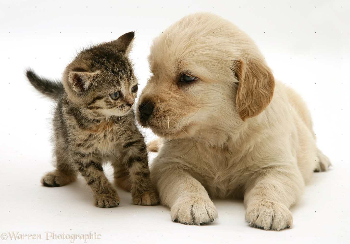 image fromhttp://galleryhip.com/pictures-of-kittens-and-puppies-together.html