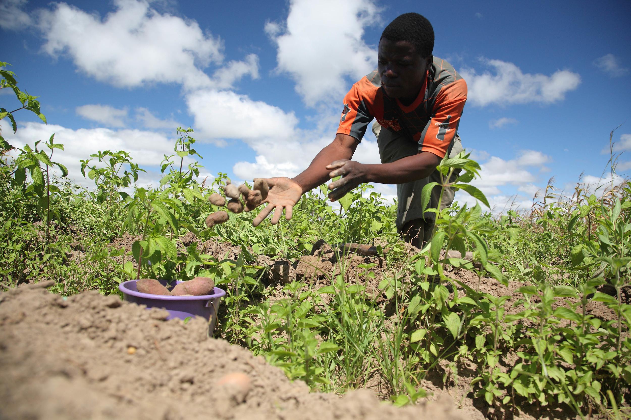 via africangreenmedia.co.za