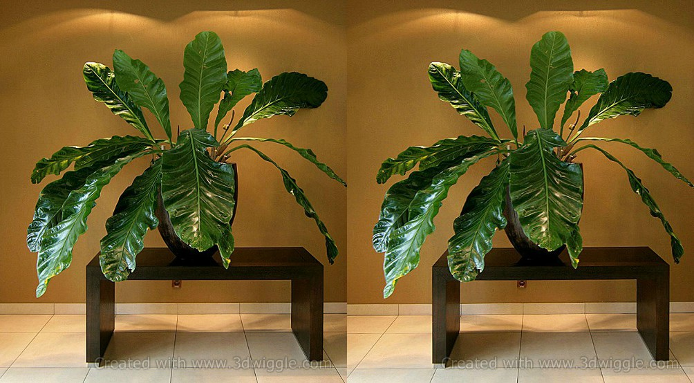 plant-stereogram-3dwiggle-software-1.jpg