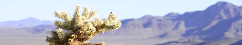 california desert -