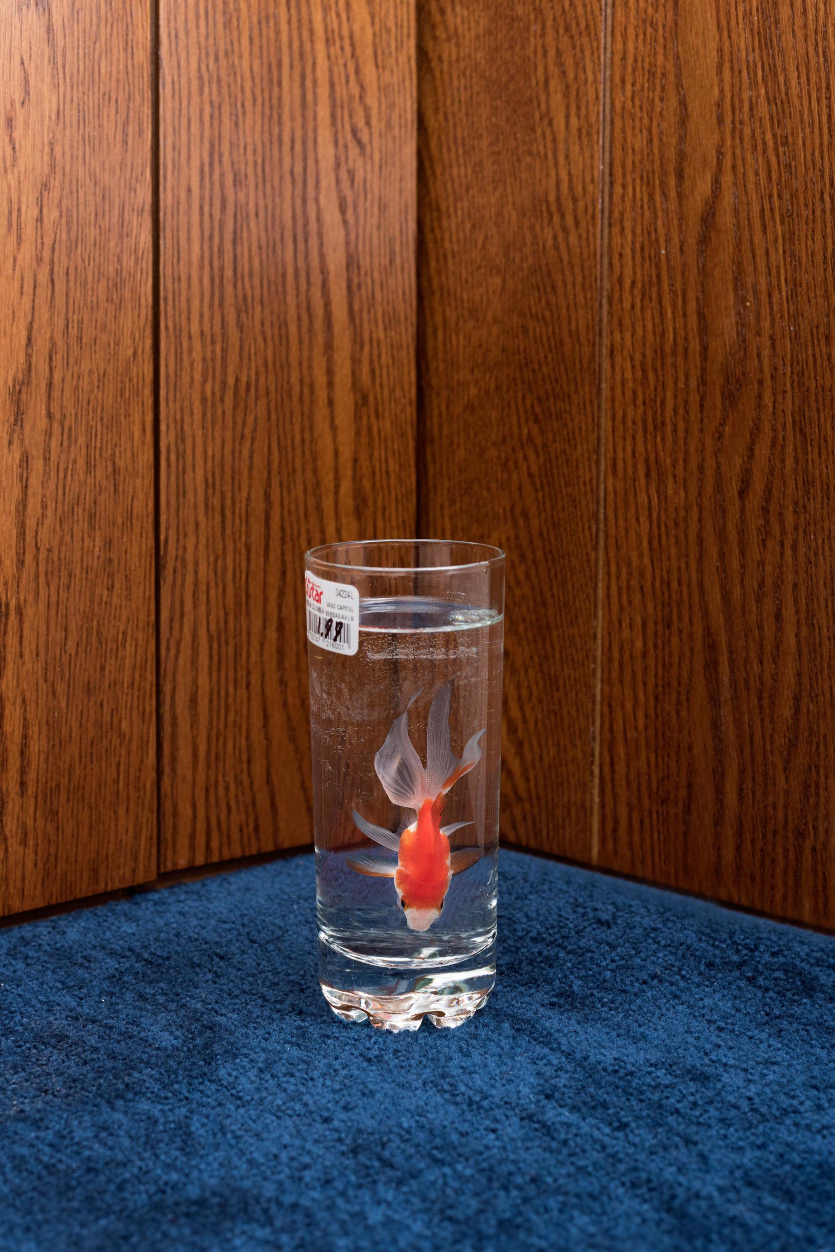 16_Goldfish.jpg