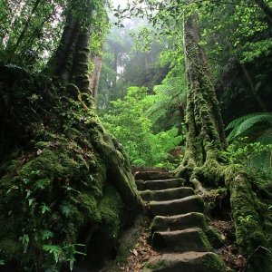Nature Stairs of Stone