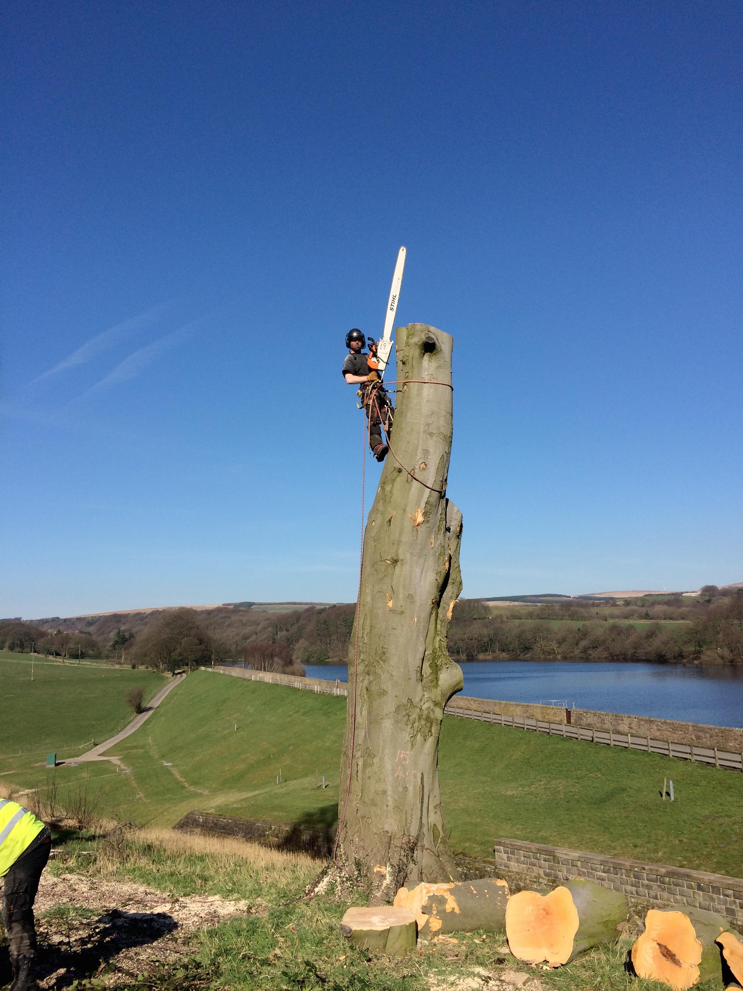 Arbortec Tree Surgeons Bolton