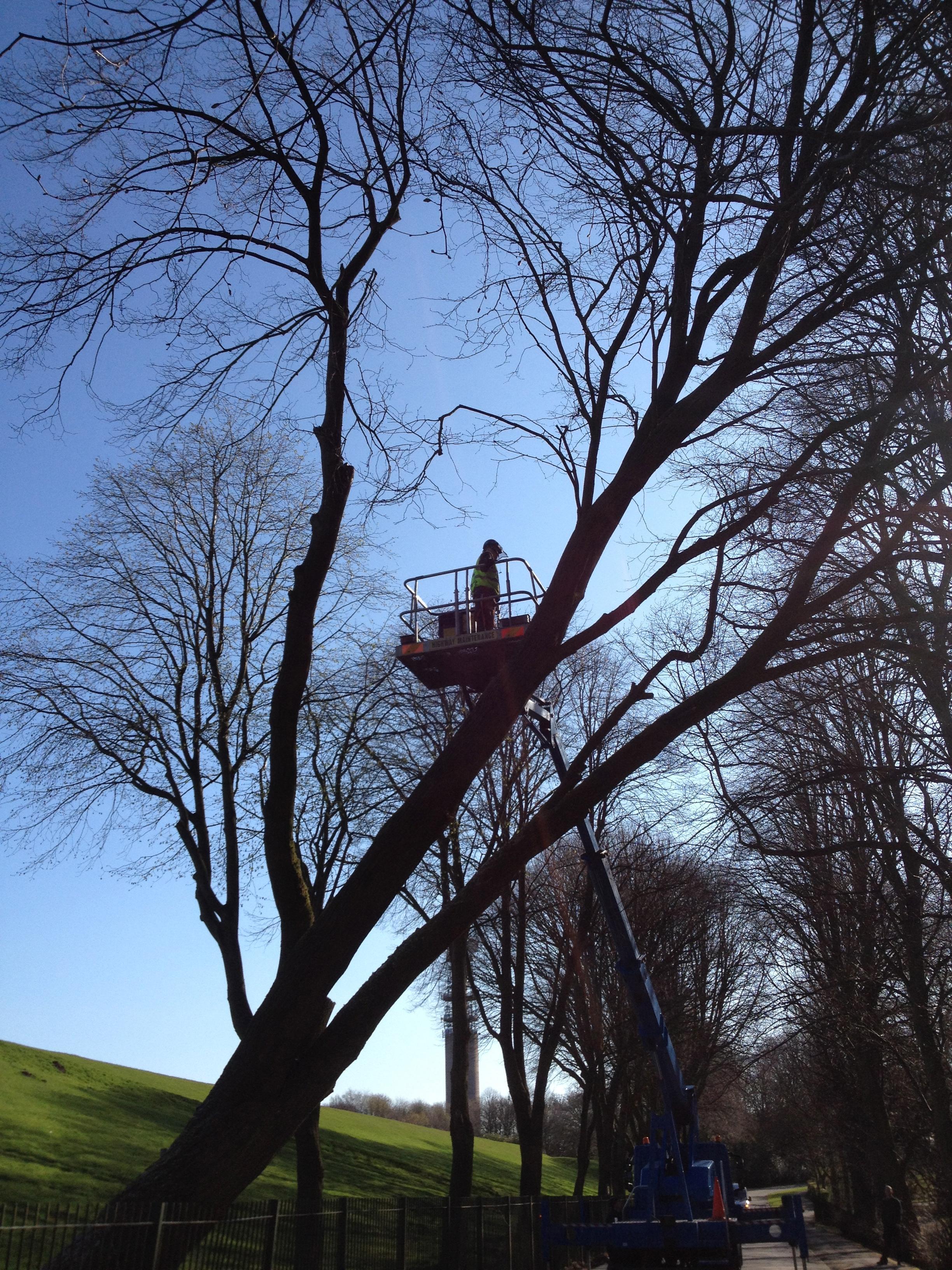 Arbortec Tree Specialists in Bolton