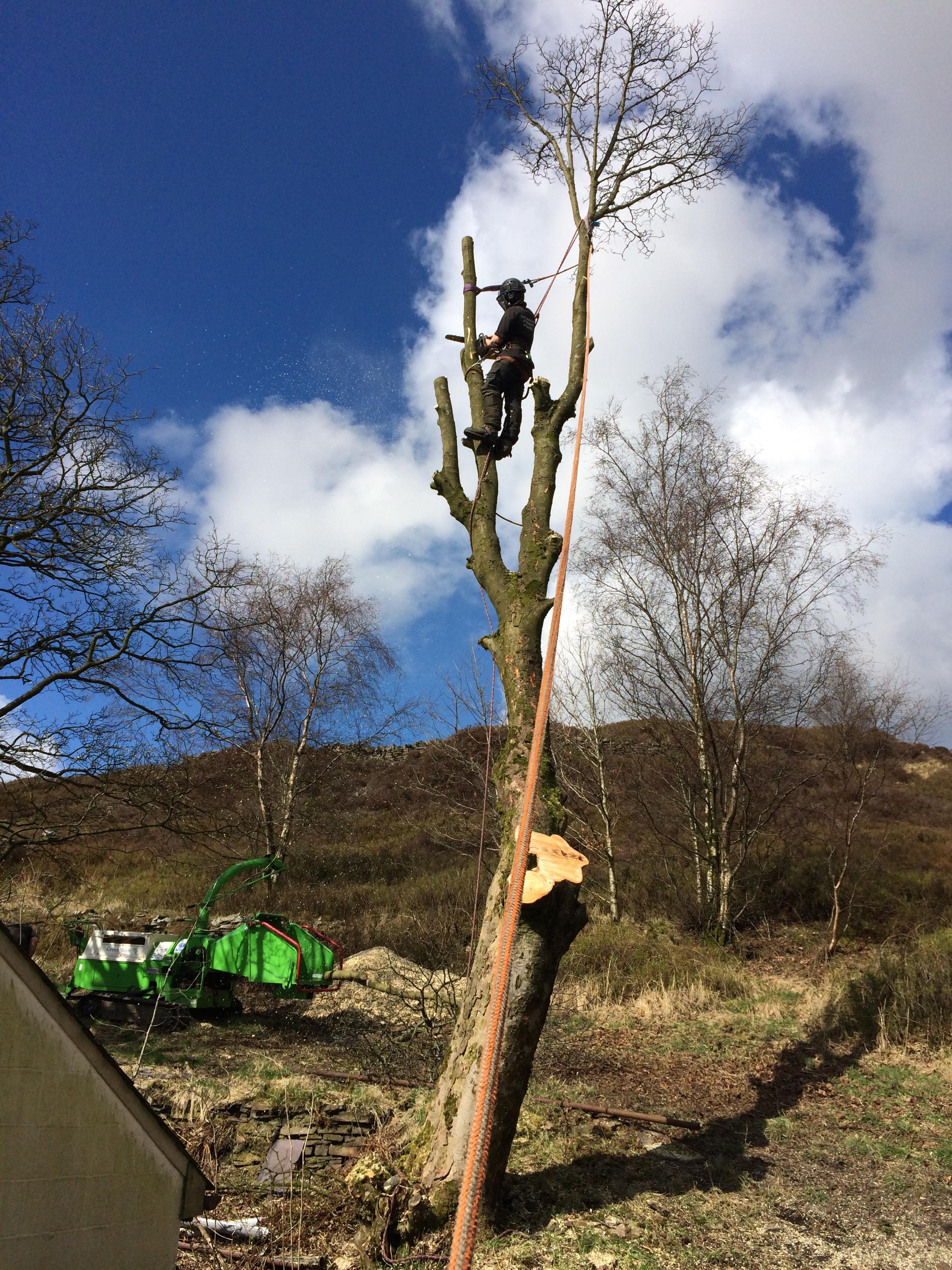 Arbrtec Tree Surgeons in Bolton