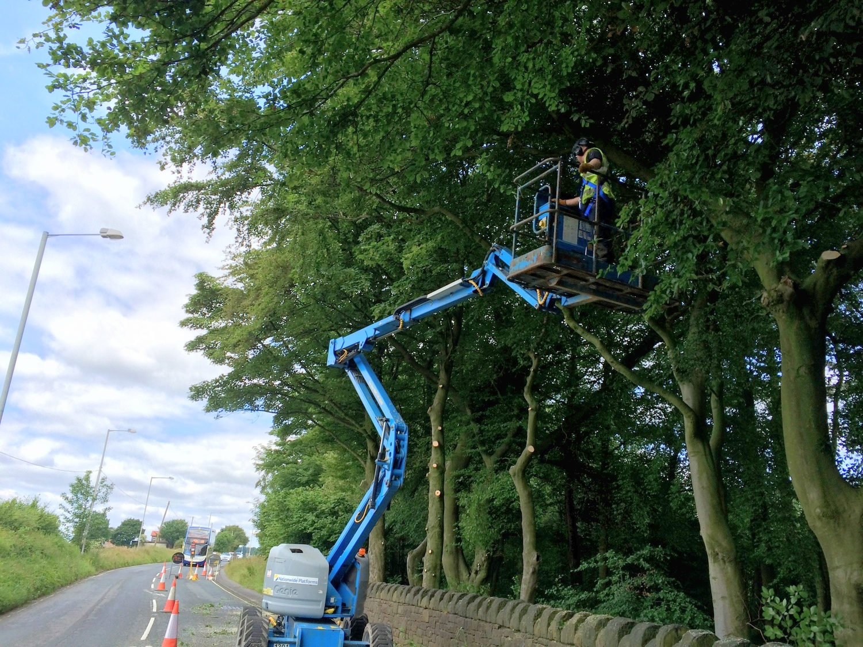 Arbortec Tree Surgeons BS3998 Crown Lifting