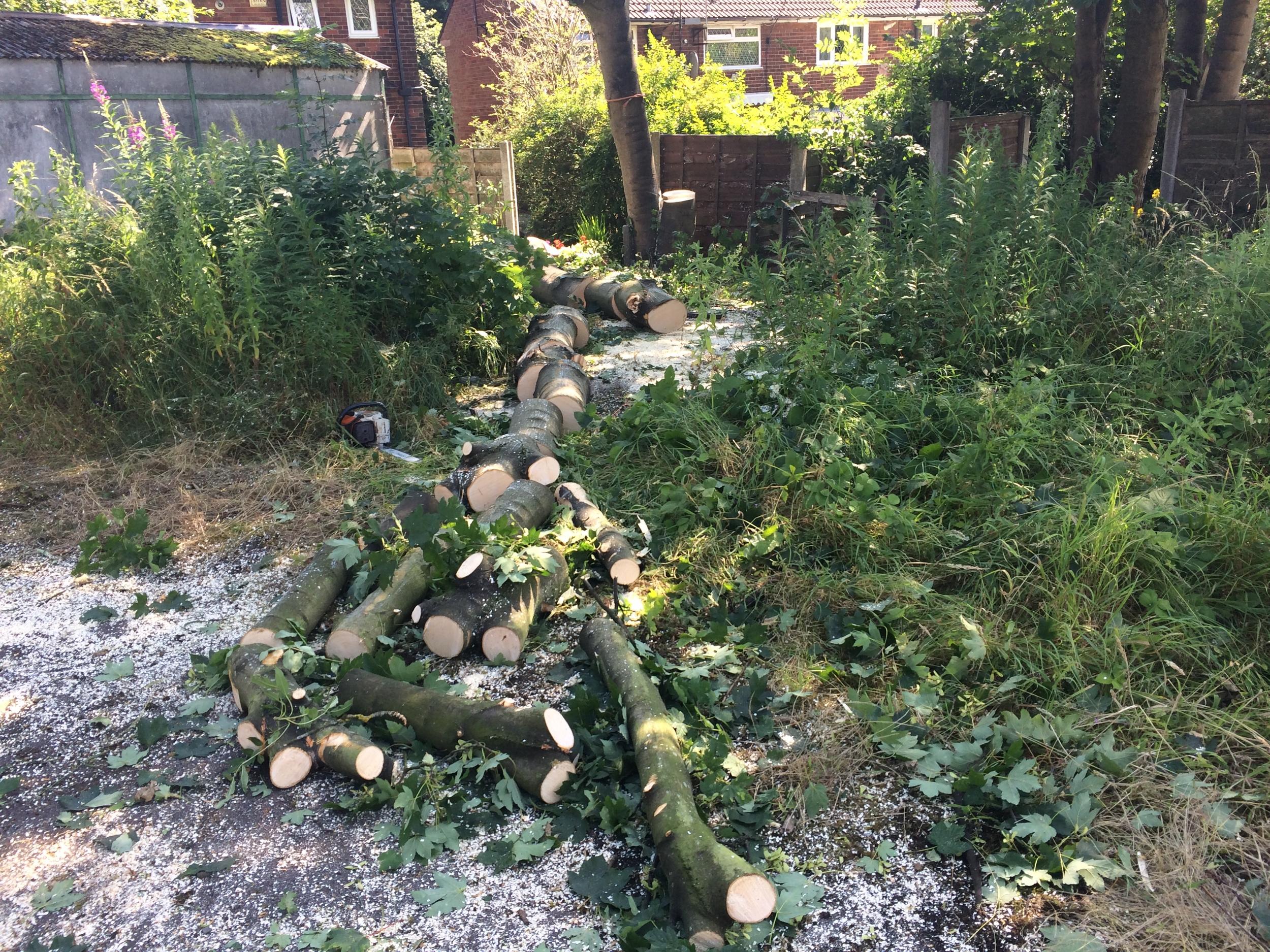 Arbortec Tree Surgeon in Bolton