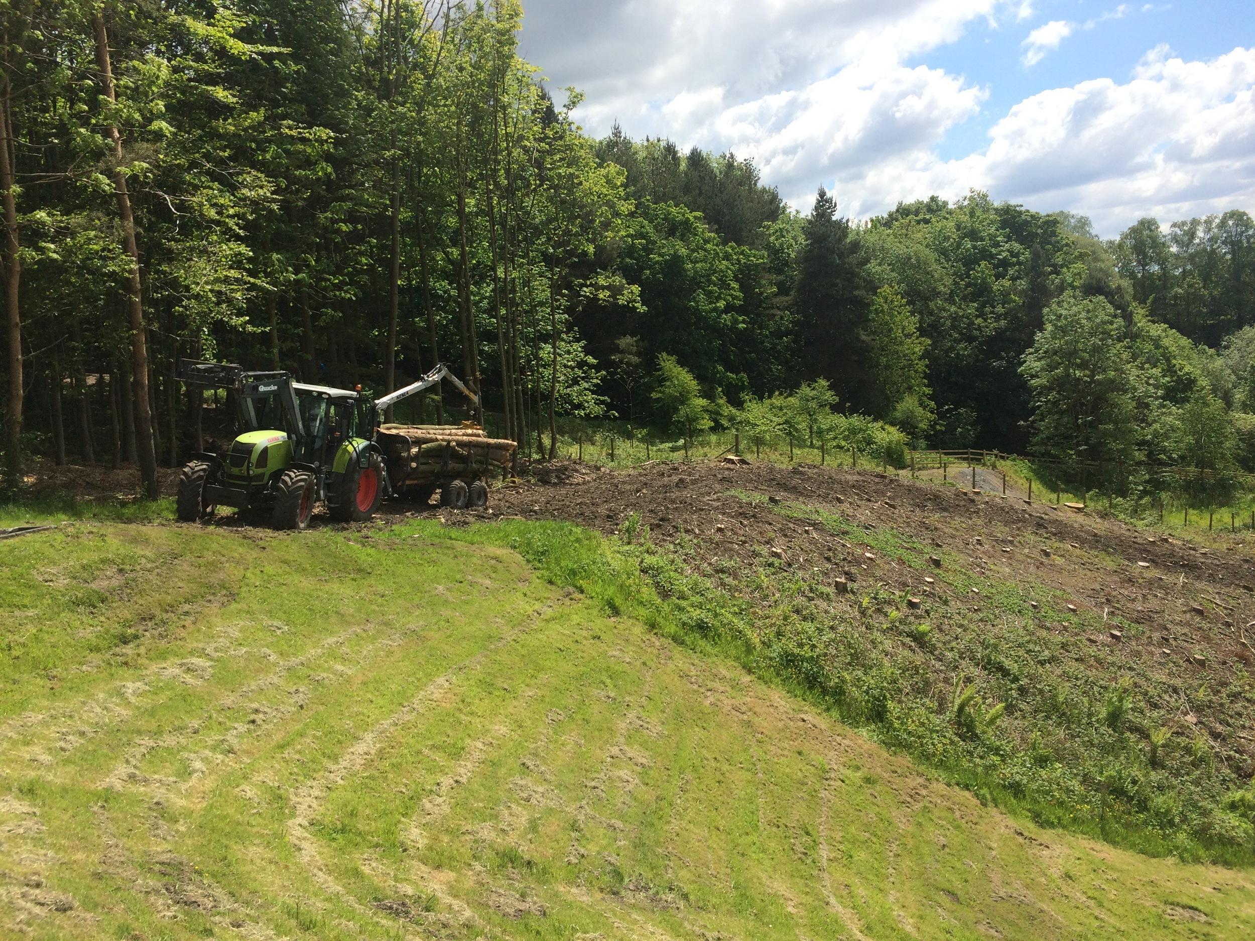 Arbortec Site Clearance