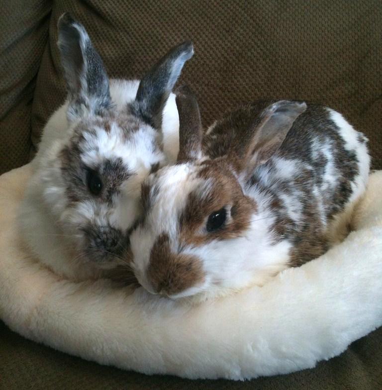 bunny museum.jpg