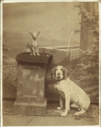 Pets in the Victorian era and for centuries before were just as beloved as they are today...even enough so to warrant a professional photo shoot