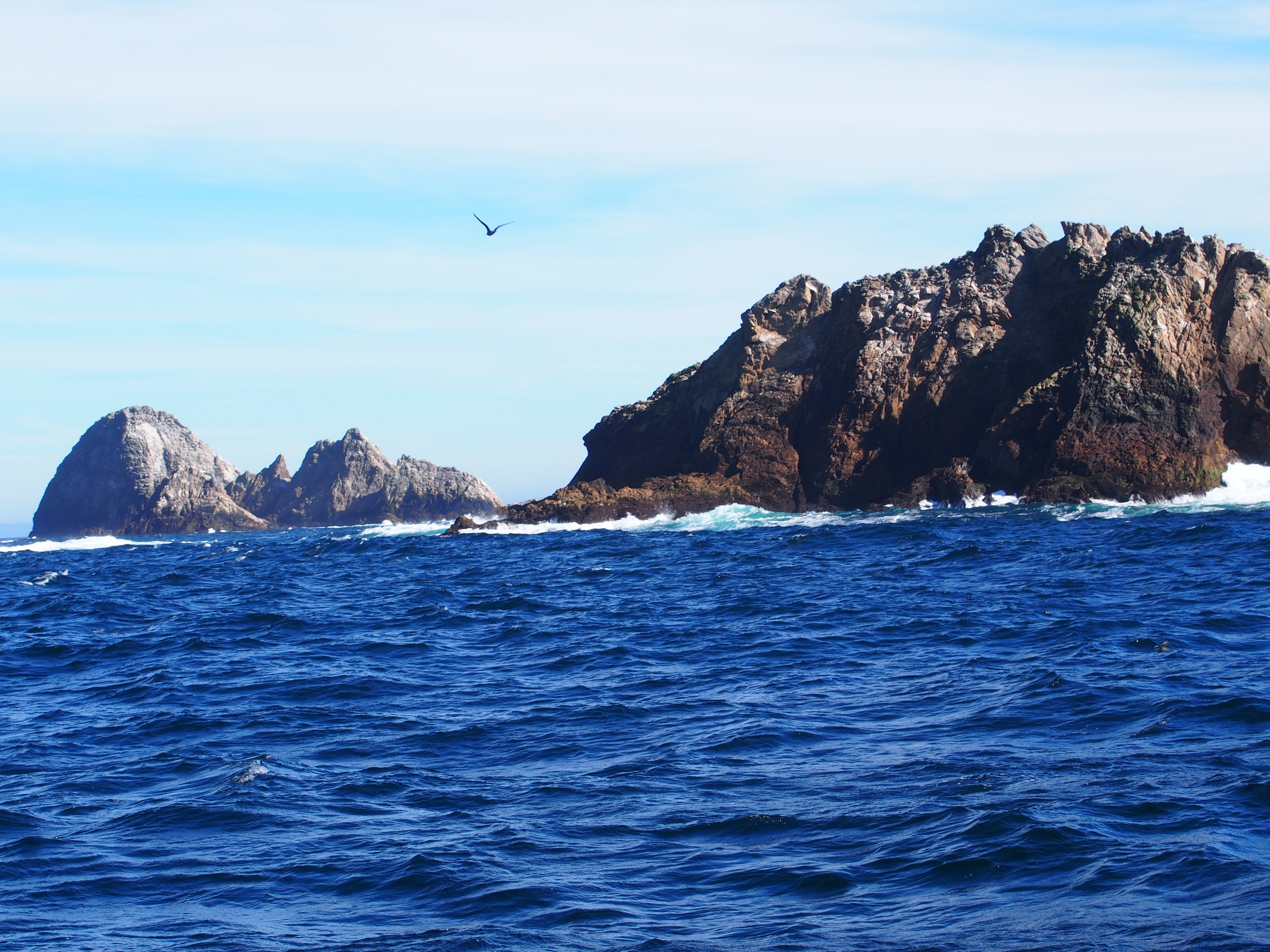 Farallon Islands and Drakes Bay Nov 2014 018.JPG