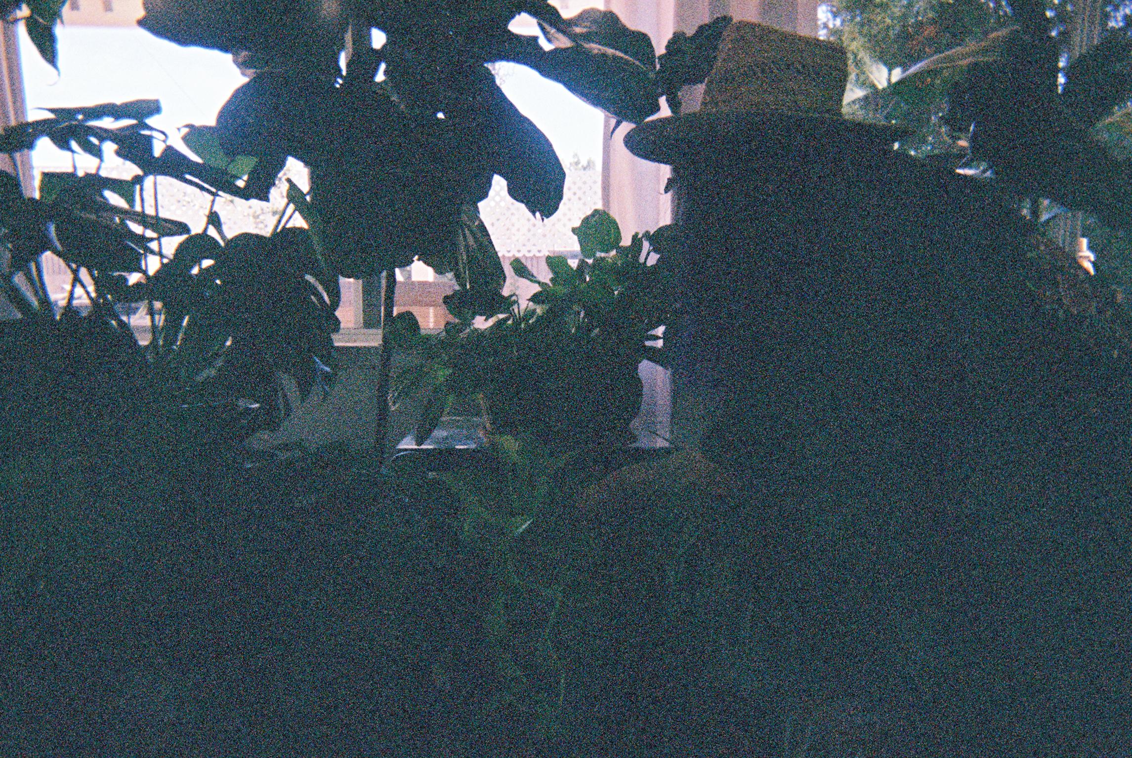 anai389-004.jpg