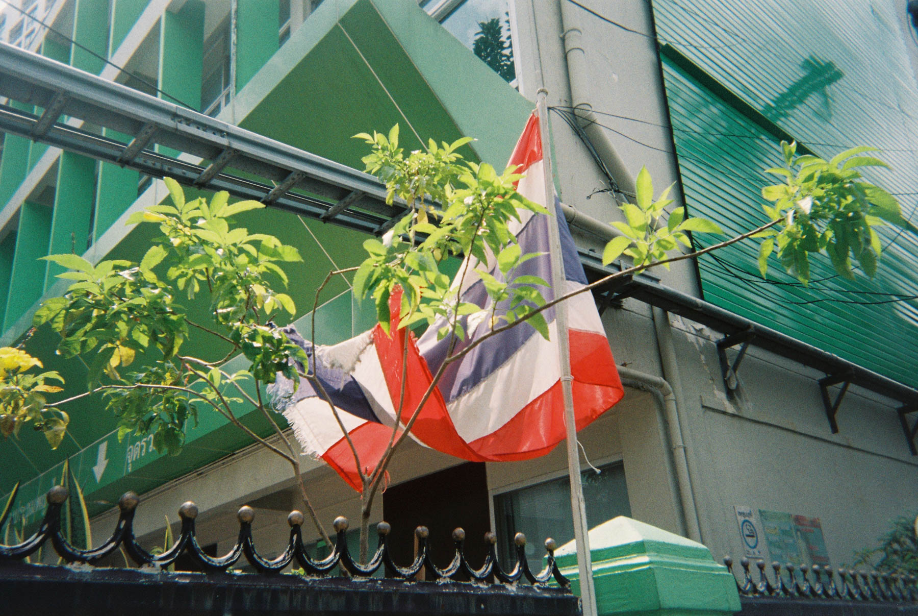 Nick Prideaux     Film Photographer, Bangkok Plants