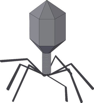 Drawing of a bacteriophage