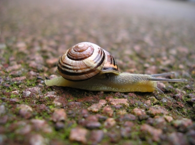 Mucus is not just produced by snails.