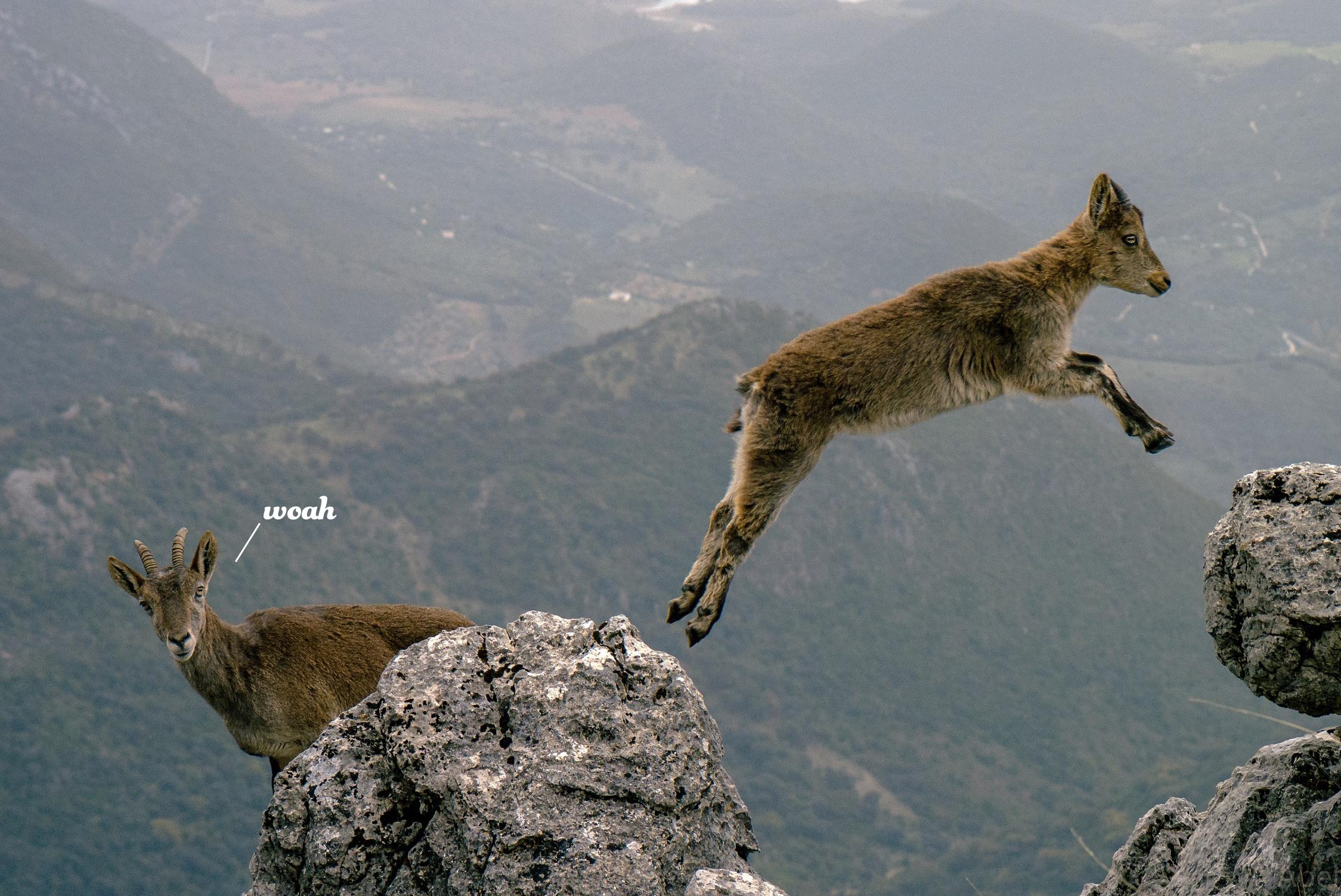 mountain-goats-1156056.jpg