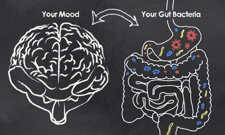 image of brain and gut
