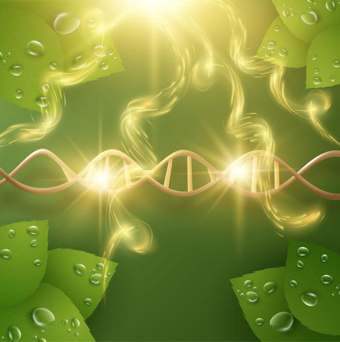 stem-cell.jpg
