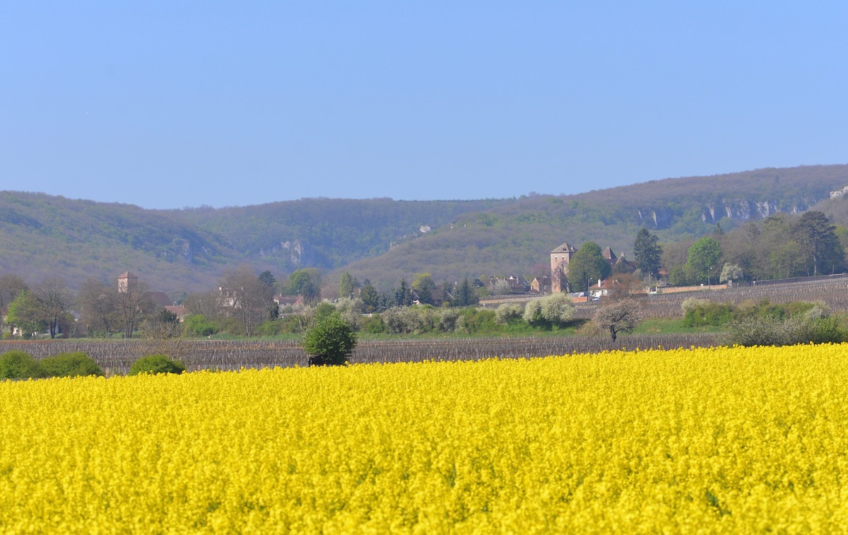 Gevrey Chambertin in April sunshine