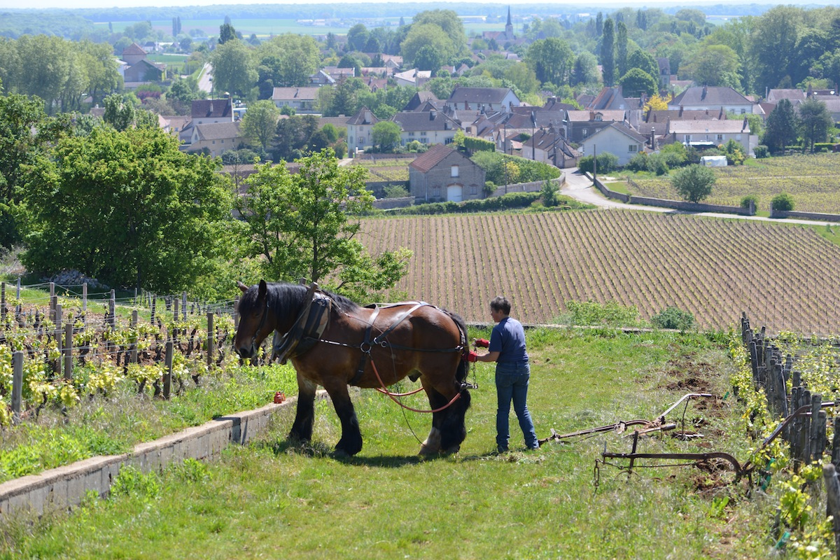 Vougeot, Burgundy, in the background
