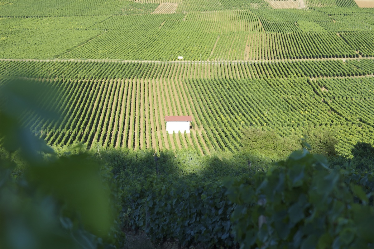 The vineyard Clos de Bèze in Gevrey Chambertin, Burgundy, has been producing wine since 636AD.   It is one of the world's most iconic and expensive wines.