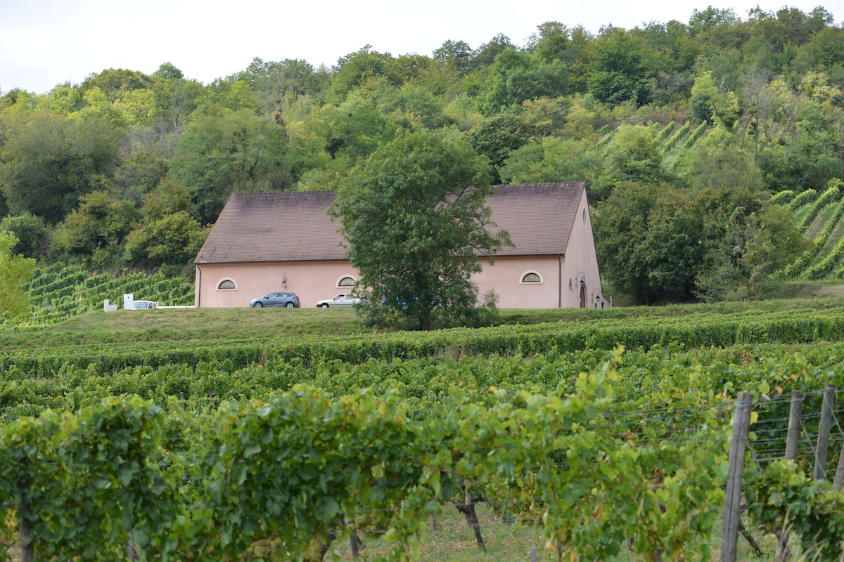 The cuverie of Machard de Gramont