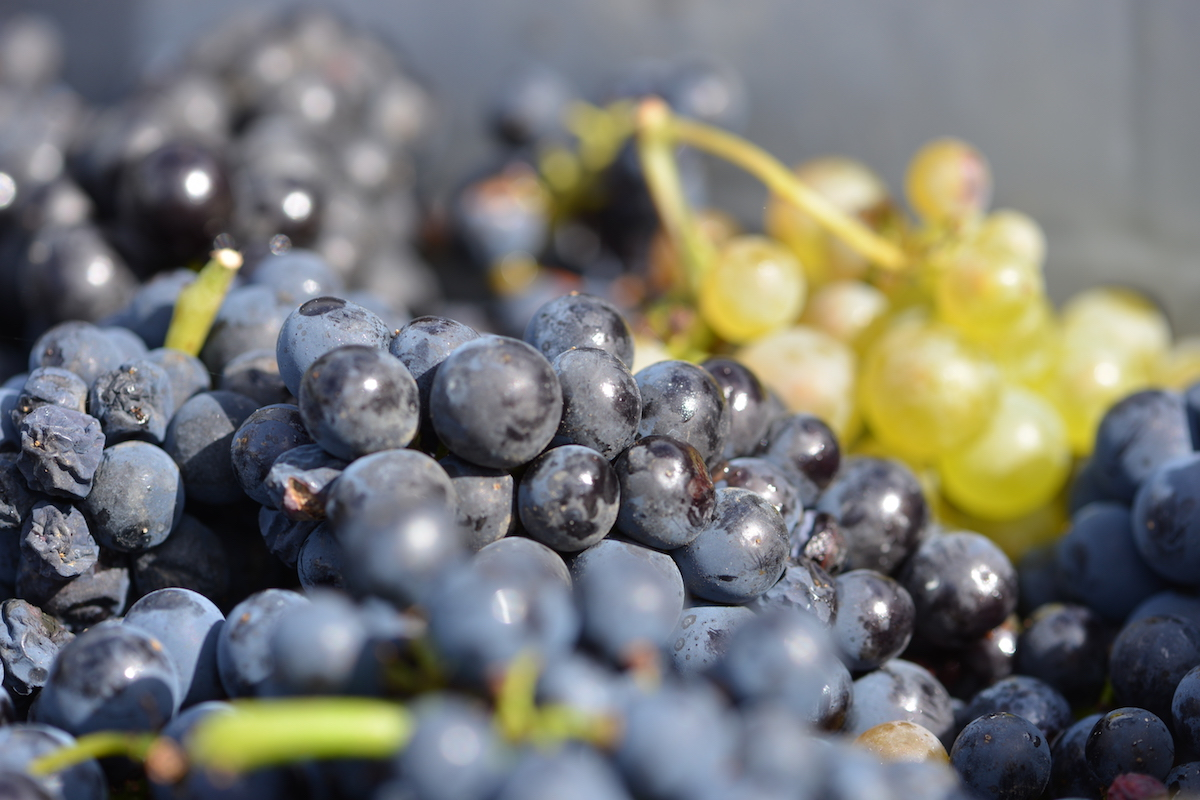 chemical free fruit from Lavaux St Jacques