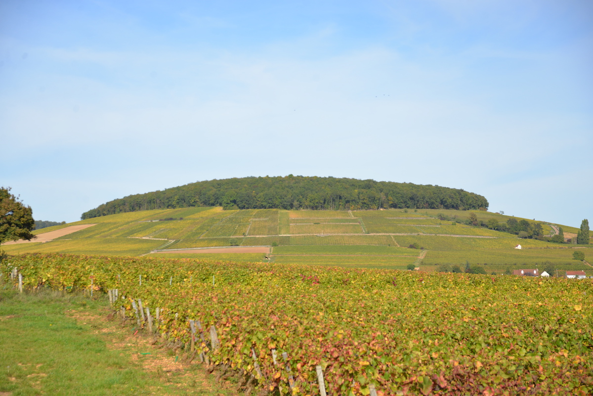 The Hill of Corton, Burgundy