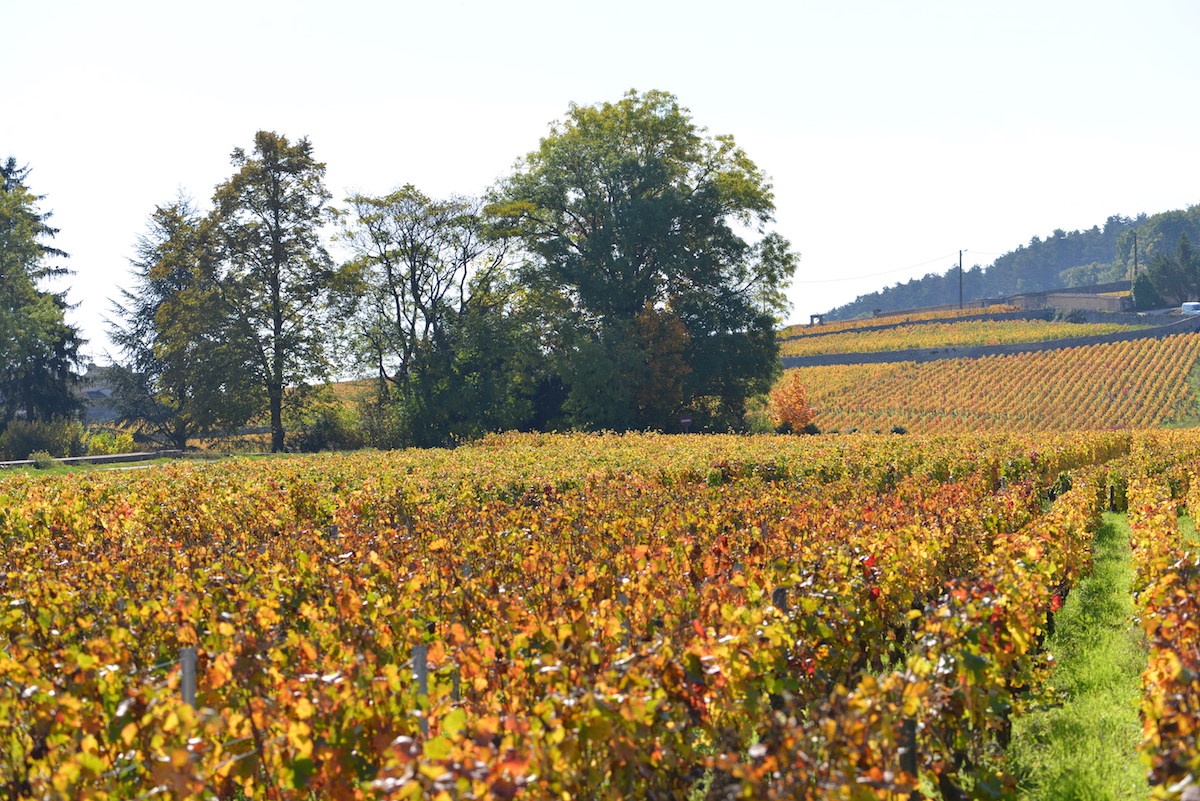 Autumn colours behind Les Deux Chevres - D 600 on autopilot!