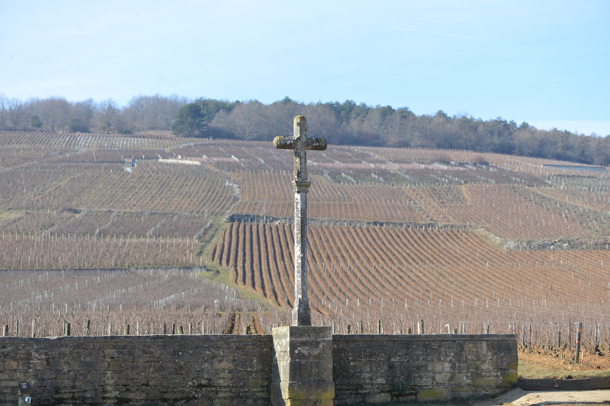 The vines of Vosne Romanée