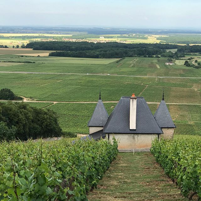 The Route Des Grands Crus, the 974, the Jura in the distance, and a lot of valuable land! @hotellesdeuxchevres #gevreychambertin #foodandwine #winelover #luxurylifestyle #magnifiquefrance #yogaeverydamnday #yogaretreat #goodvibes #restaurant #chef