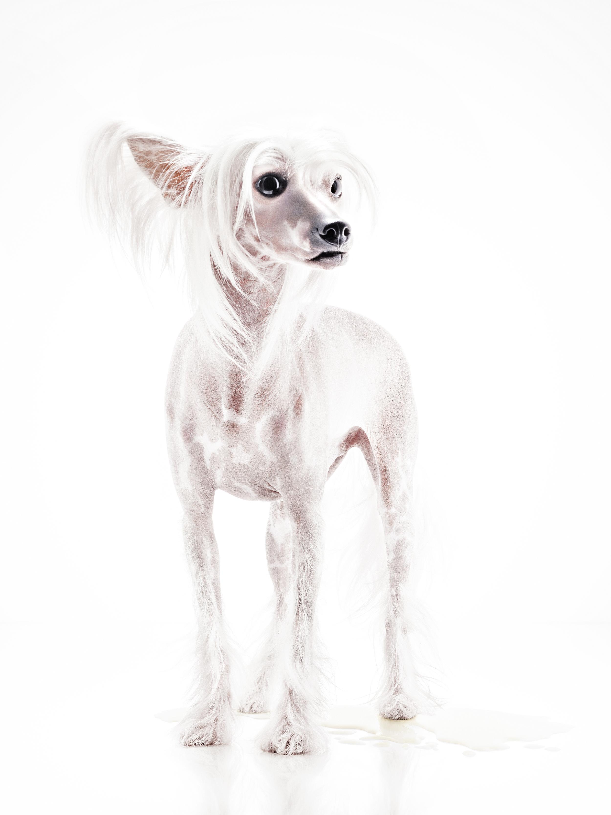 hund_1.jpg