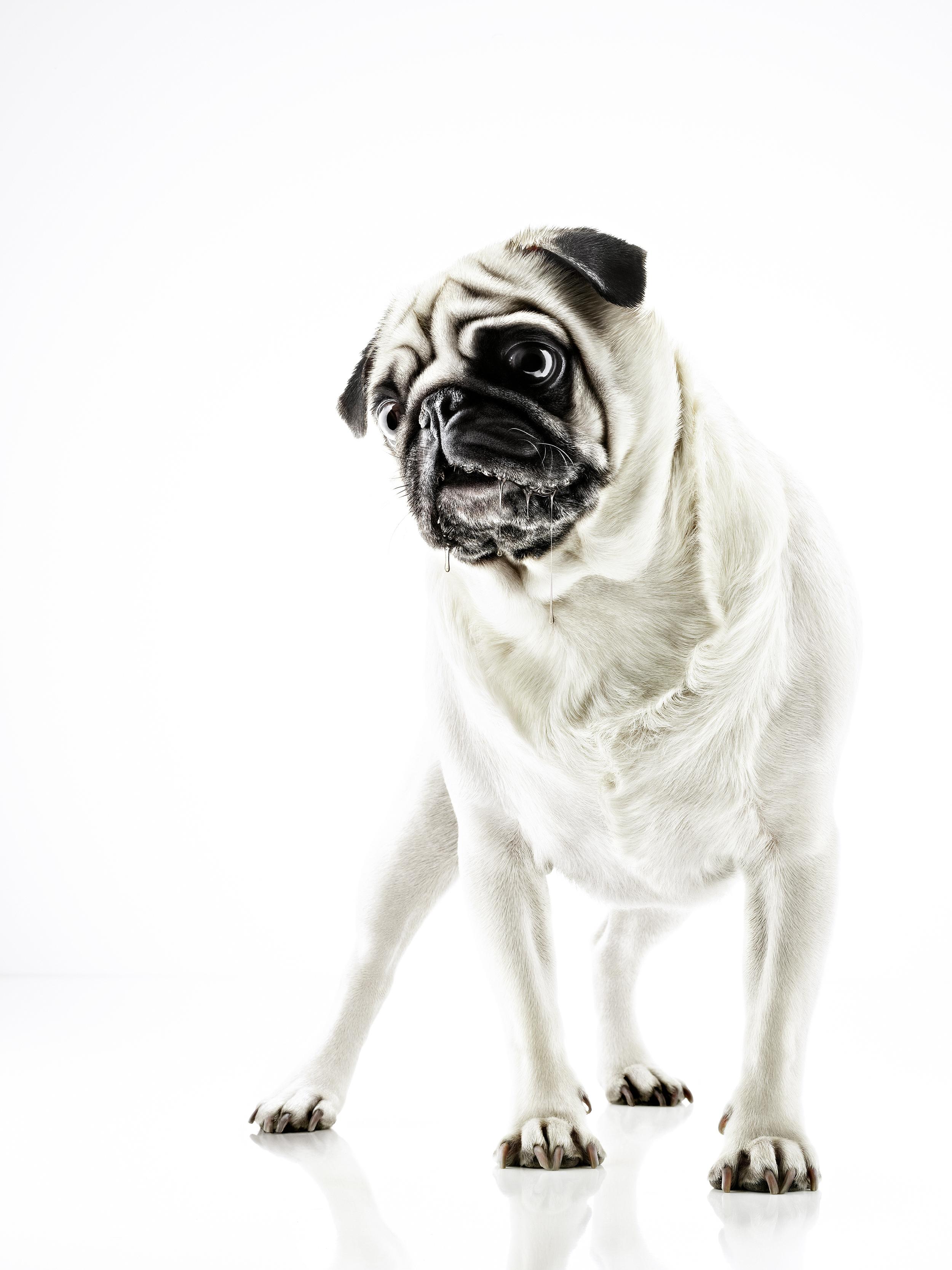 hund_3.jpg