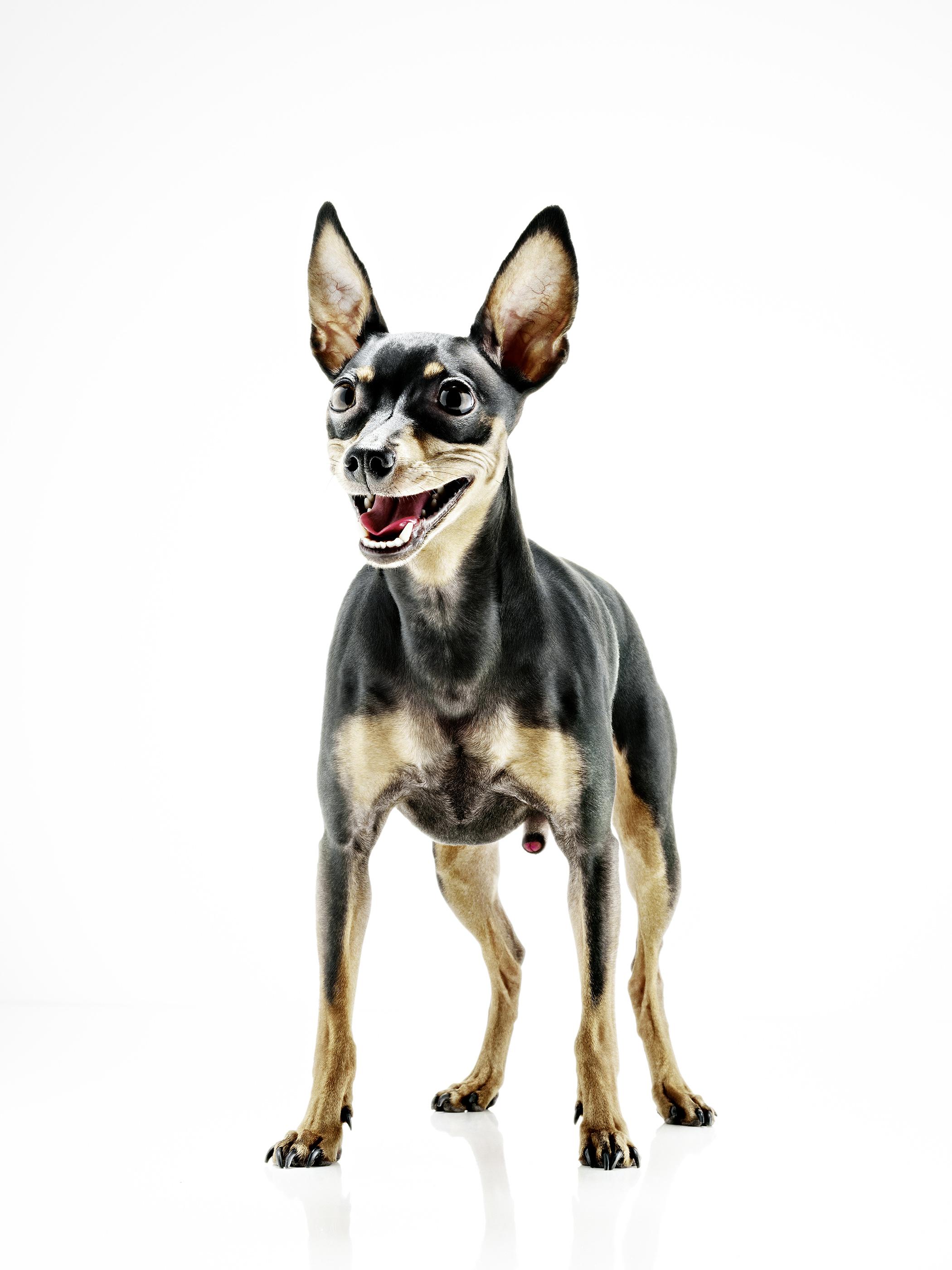 hund_2.jpg