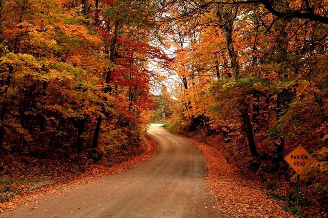 fall_drive.jpg