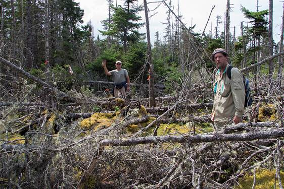 Site of the old schoolhouse found by Nature Trust volunteers Dave Young and Dusan Soudek.