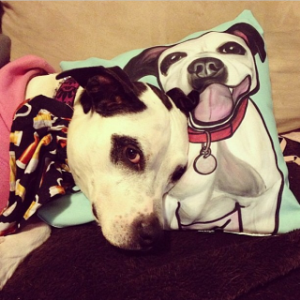 Dolce and her Society6 throw pillow.