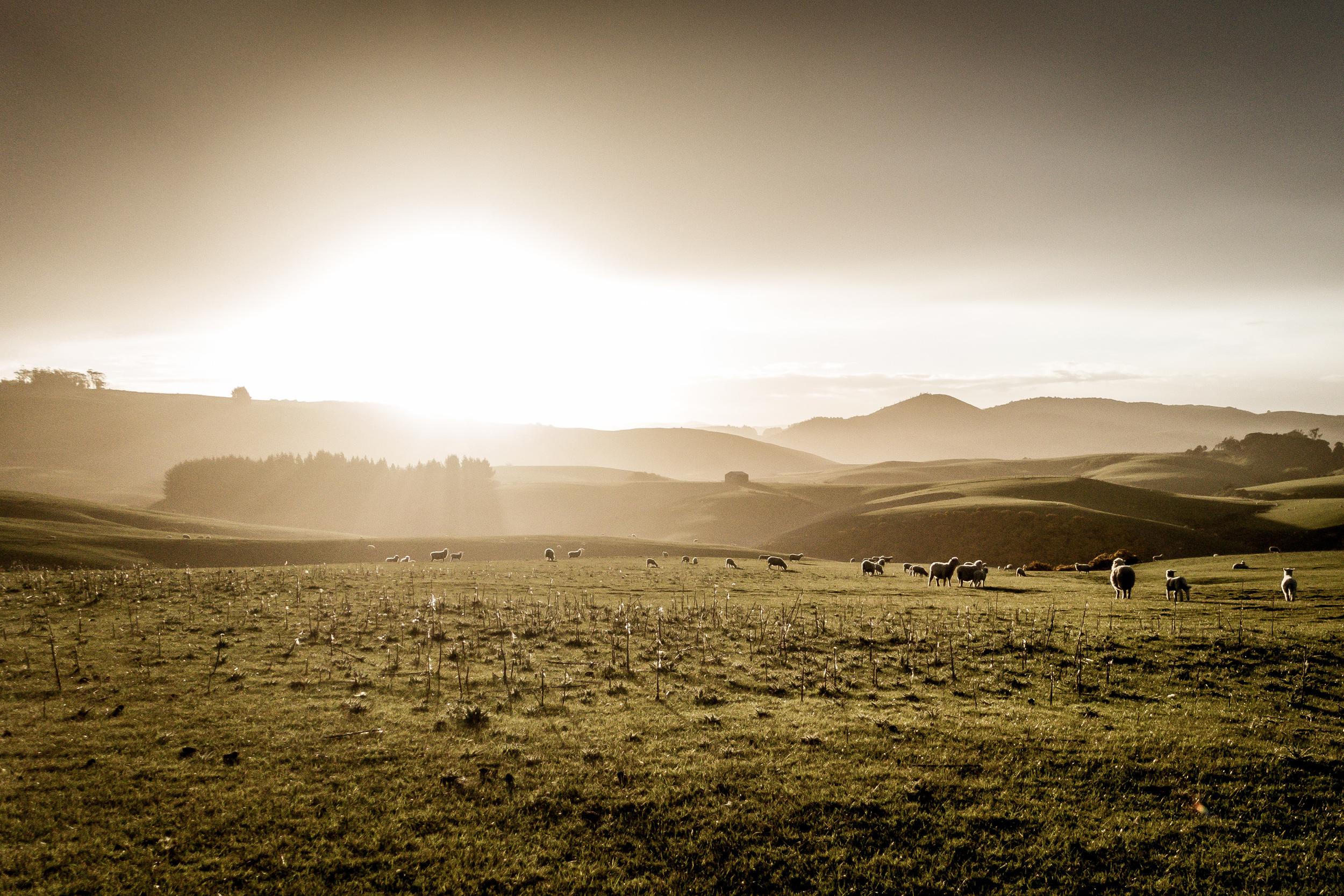 NEW ZEALAND - KAKA POINT FARMSTAY