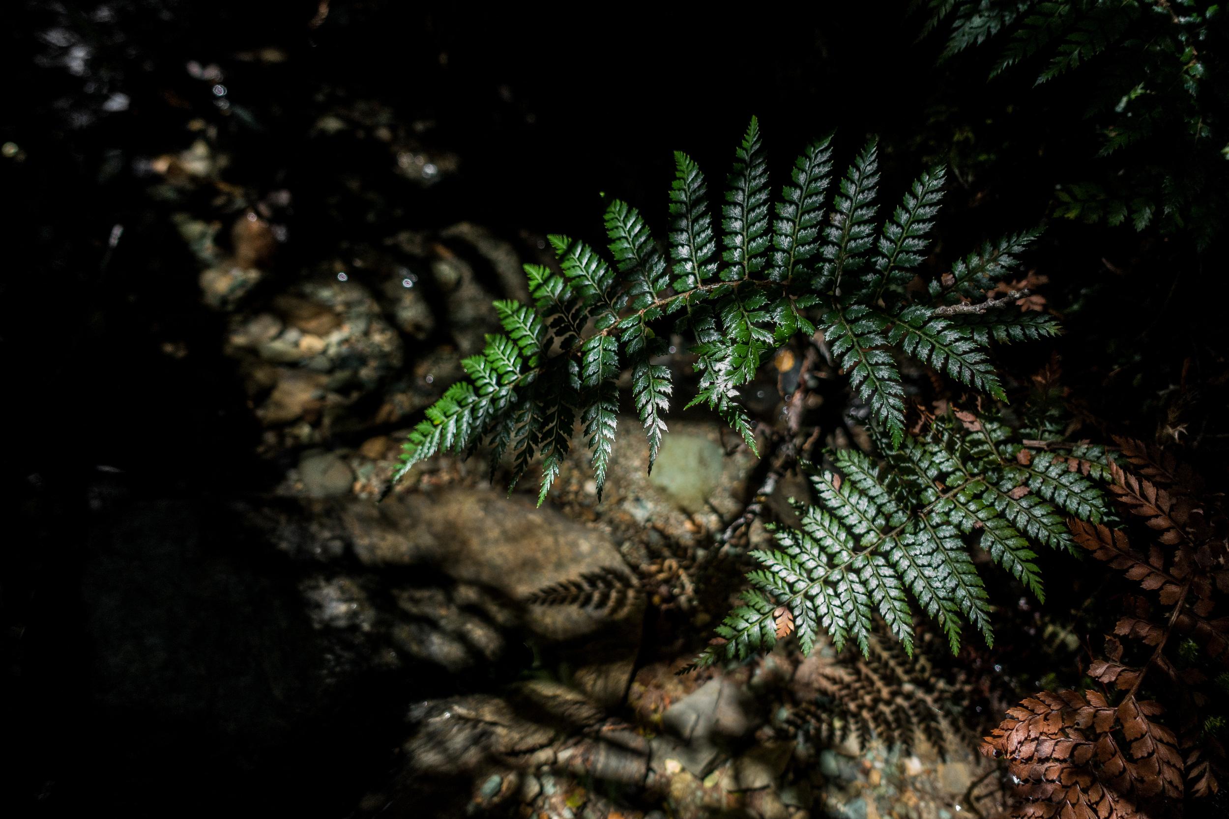 NEW ZEALAND - ROUTEBURN TRACK