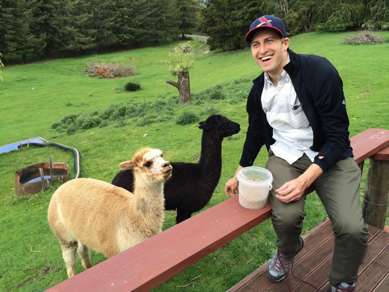 brbtraveling_alpacas_airbnb