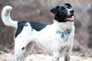 Jasper  is a border collie mix. He's an energetic fella, but he's not so good with the sharing.