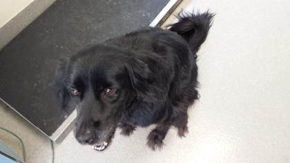 Cassie  is a snuggly Spaniel looking for love