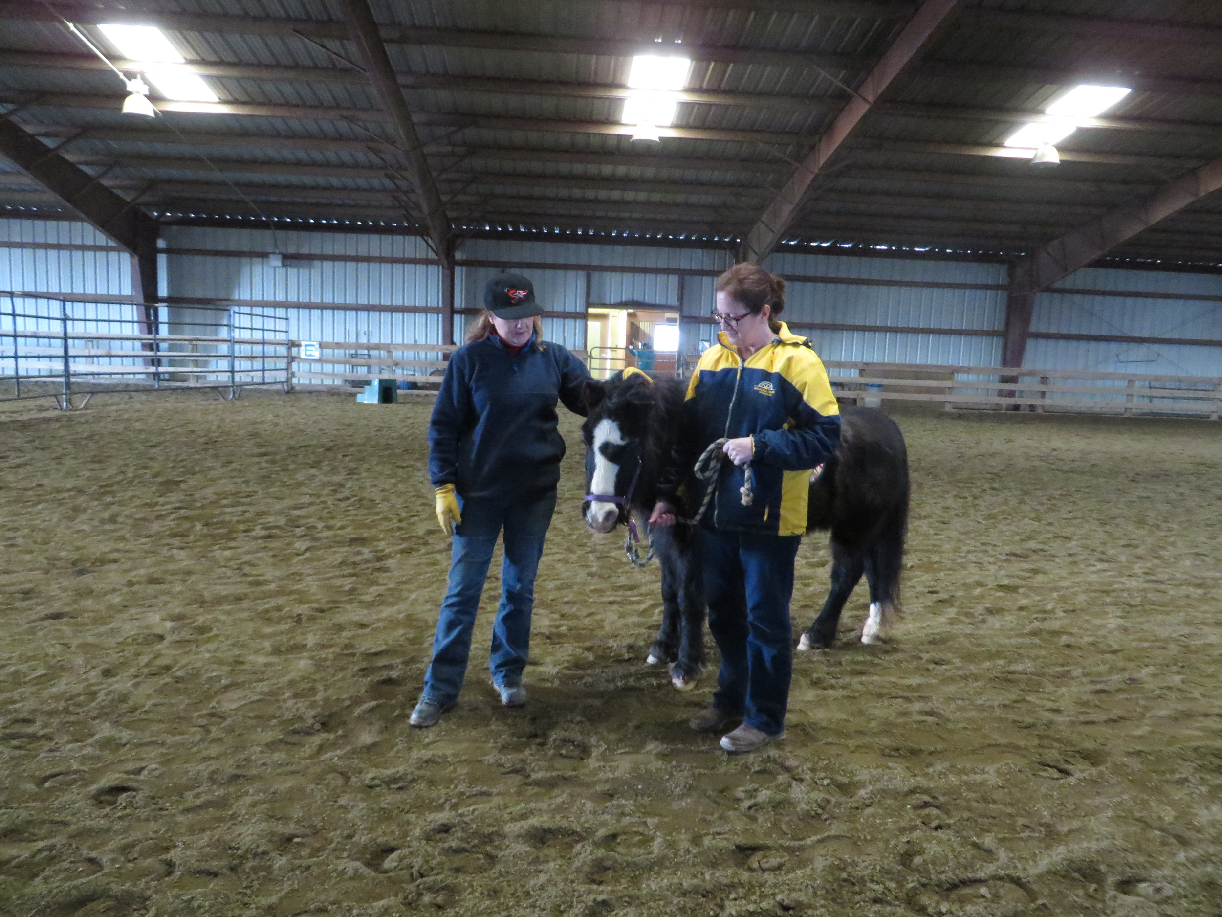 Duckie, a hippotherapy horse, is warmed up before a session