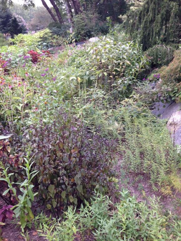Rainscape garden in Brookside Garden, Wheaton/Silver Spring/Photo by Holly Leber